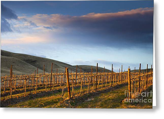 Vineyard Storm Greeting Card by Mike  Dawson