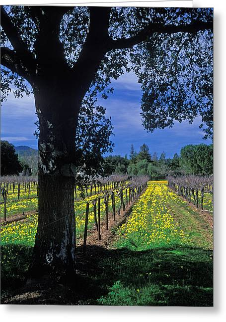 Vineyard Prints Greeting Cards - Vineyard View Greeting Card by Kathy Yates
