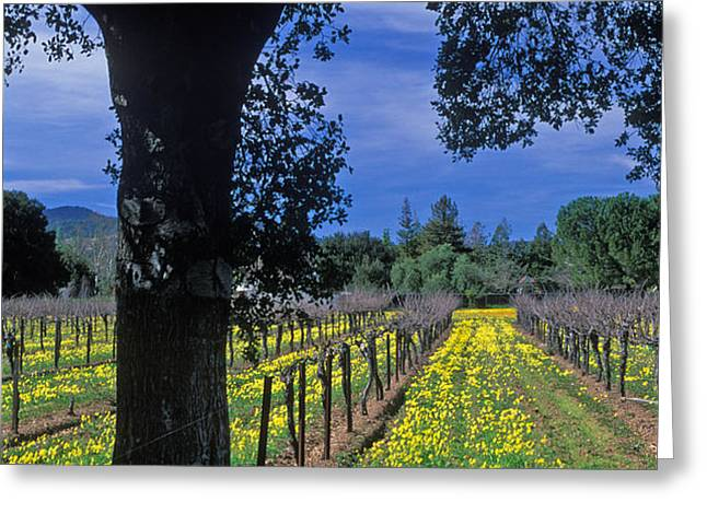 Vineyard View Greeting Card by Kathy Yates
