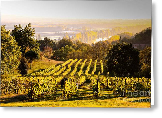 Vineyard Greeting Card by Voisin and Phanie and Photo Researchers