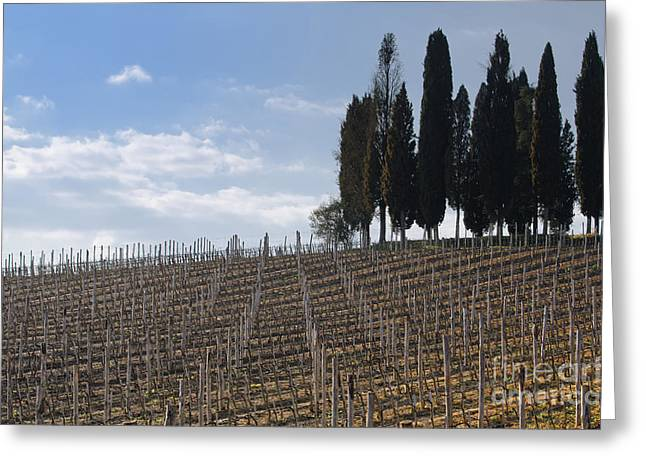 Chianti Greeting Cards - Vineyard with cypress trees Greeting Card by Mats Silvan