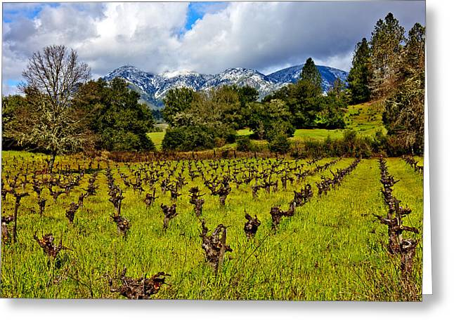 Sonoma County Vineyards. Greeting Cards - Vineyards and Mt St. Helena Greeting Card by Garry Gay