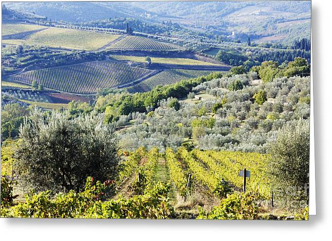 Vineyards And Olive Groves Greeting Card by Jeremy Woodhouse
