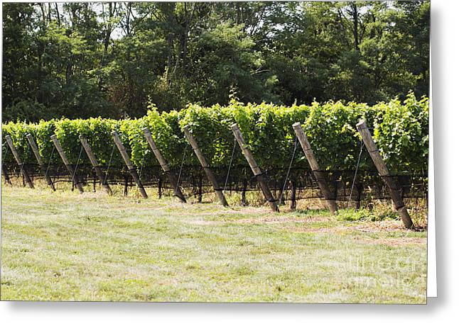 Vineyards Greeting Card by Leslie Leda