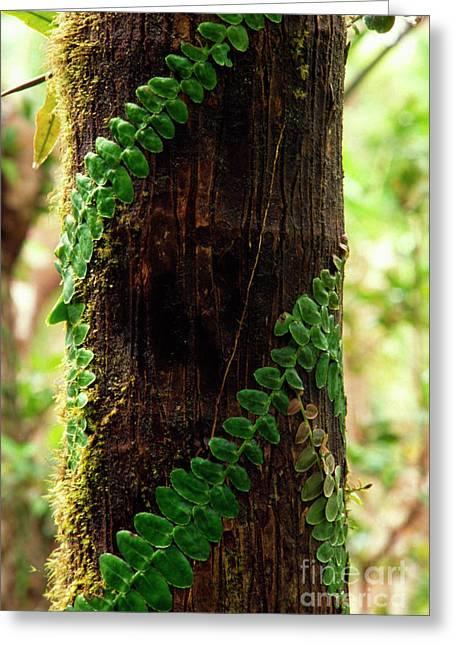 Tendrils Greeting Cards - Vining Fern on Sierra Palm Tree Greeting Card by Thomas R Fletcher