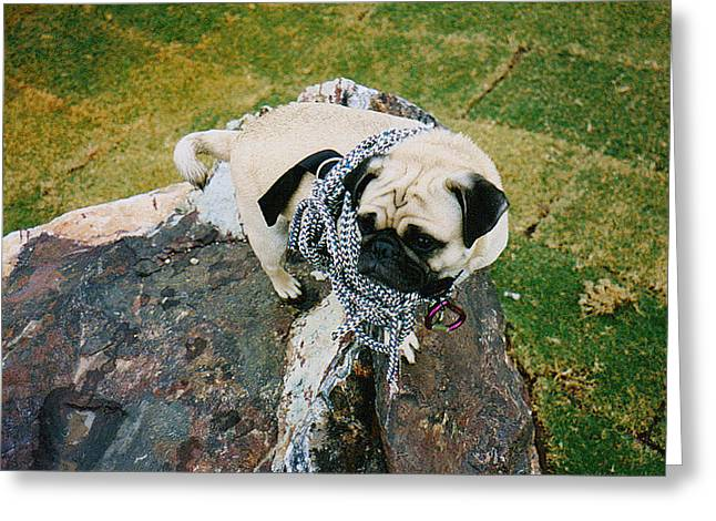 Fund Raising Greeting Cards - Vinny the atop Mt. Camelback 2 Greeting Card by Allen Kimble jr