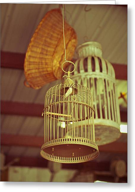 Vintage Birdcages Greeting Card by Sonja Quintero