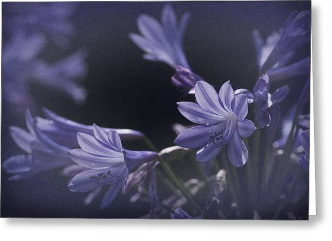 Nile Lily Greeting Cards - Vintage Blue Storm Greeting Card by Richard Cummings