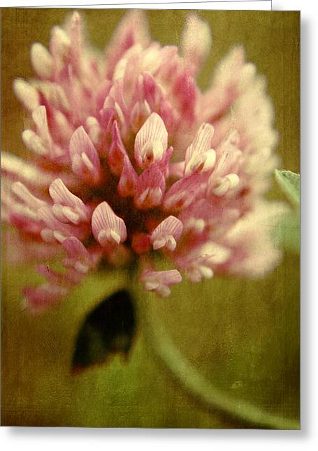 Recently Sold -  - Aimelle Prints Greeting Cards - Vintage clover Greeting Card by Aimelle