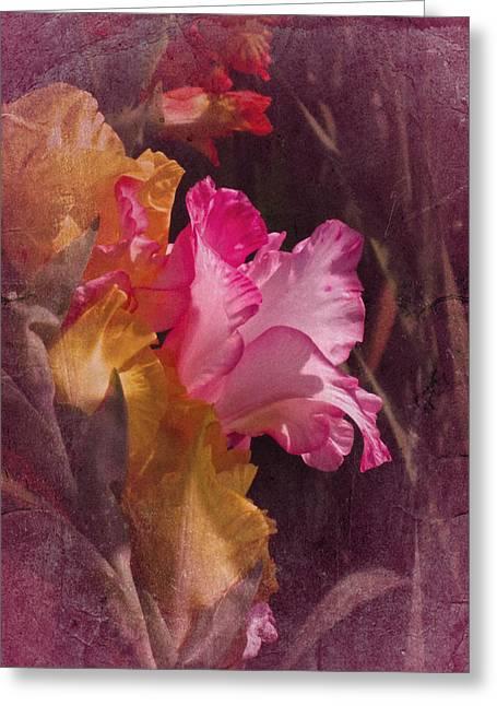 Vintage Gladiolas Greeting Card by Richard Cummings