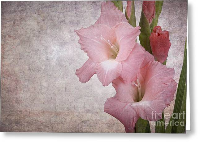 Gladiolus Greeting Cards - Vintage gladioli Greeting Card by Jane Rix