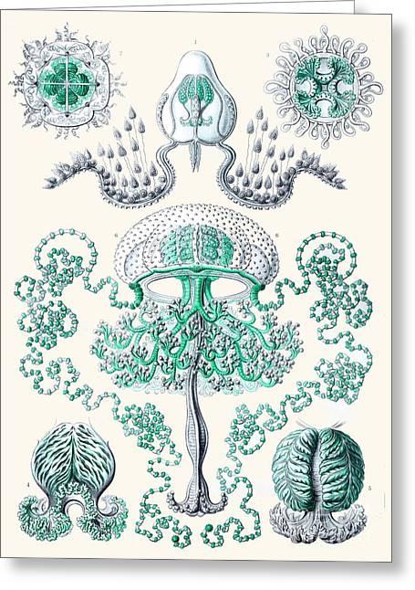 Vintage Jellyfish Greeting Card by Patruschka Hetterschij