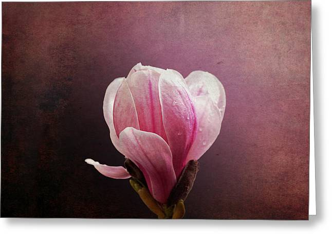 Grungy Greeting Cards - Vintage Magnolia Greeting Card by Jane Rix