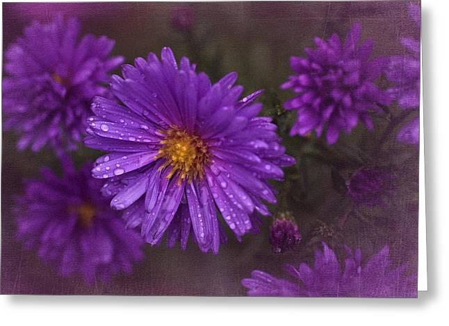 Vintage Purple  Greeting Card by Richard Cummings