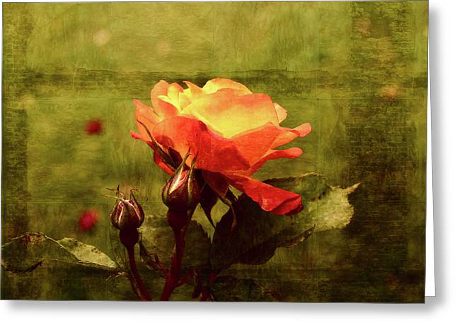 Tangerines Mixed Media Greeting Cards - Vintage Rose Greeting Card by Bonnie Bruno