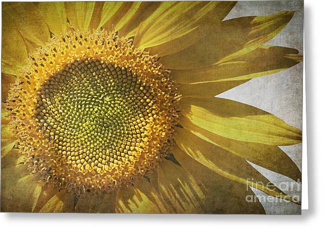 Wallpaper Photographs Greeting Cards - Vintage sunflower Greeting Card by Jane Rix