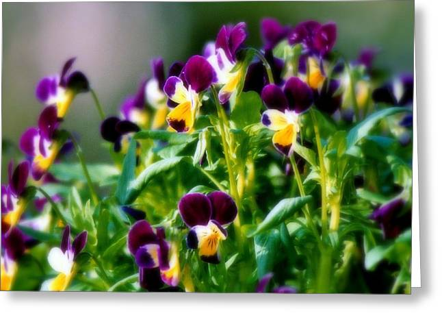Green And Yellow Greeting Cards - Viola Parade Greeting Card by Karen Wiles