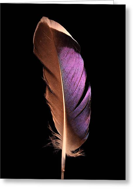 Shining Down Greeting Cards - Violet Splendor Greeting Card by Adam Long