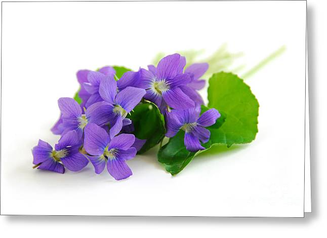 White Background Greeting Cards - Violets on white background Greeting Card by Elena Elisseeva