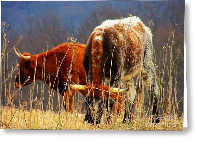 Virginia Bulls Greeting Card by Joyce Kimble Smith