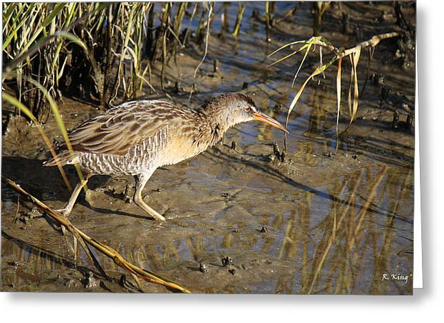 Wildlife Genre Greeting Cards - Virginia Rail Out In The Open Greeting Card by Roena King
