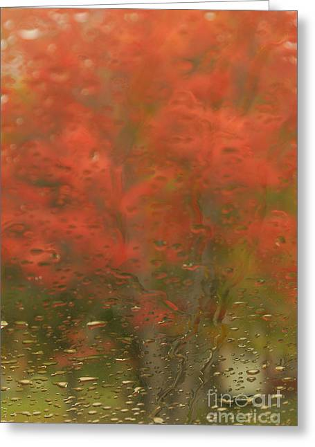 Aimelle Photography Greeting Cards - Vision Greeting Card by Aimelle