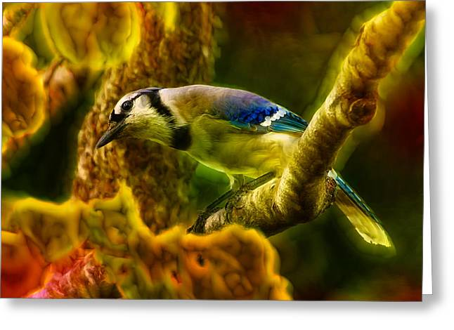 Bird On Tree Digital Greeting Cards - Visions of a Blue Jay Greeting Card by Bill Tiepelman