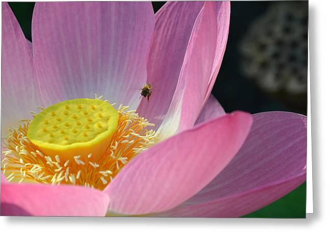 Pink Blossoms Greeting Cards - Visiting Hours Greeting Card by Fraida Gutovich