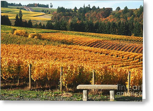 Grapevines Greeting Cards - Visiting Wine Country Greeting Card by Margaret Hood