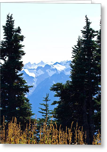 Pacific Northwest Greeting Cards - Vistas Along the Trail Greeting Card by Marie Jamieson