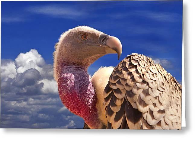 Vulture Greeting Card by Alessandro Matarazzo