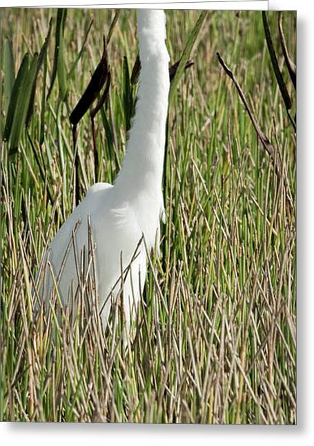 Skinny Greeting Cards - Wading Great Egret Greeting Card by Patrick M Lynch