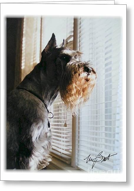 Giant Schnauzer Greeting Cards - Waiting at the Window Greeting Card by Maxine Bochnia