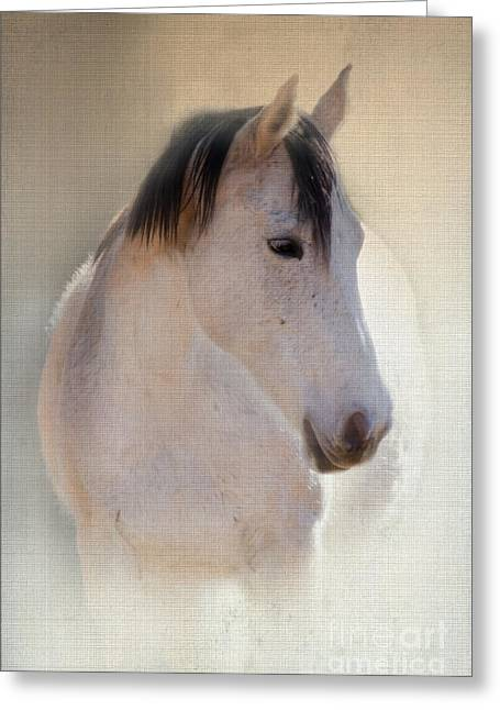 Quarter Horse Digital Art Greeting Cards - Waiting For Her Greeting Card by Betty LaRue