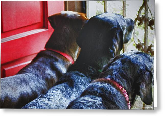 Chocolate Lab Greeting Cards - Waiting For Momma Greeting Card by Roger Wedegis