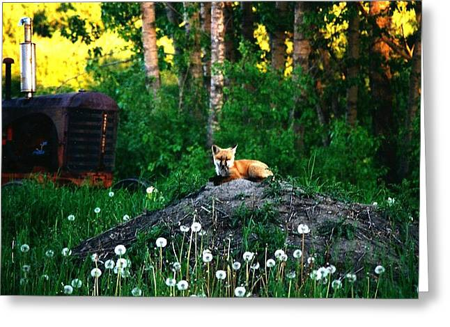 Canada Greeting Cards - Waiting For Mother Greeting Card by Shirley Sirois