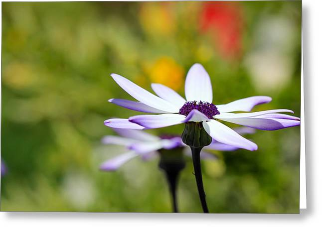 Senetti Photographs Greeting Cards - Waiting Greeting Card by Heidi Smith