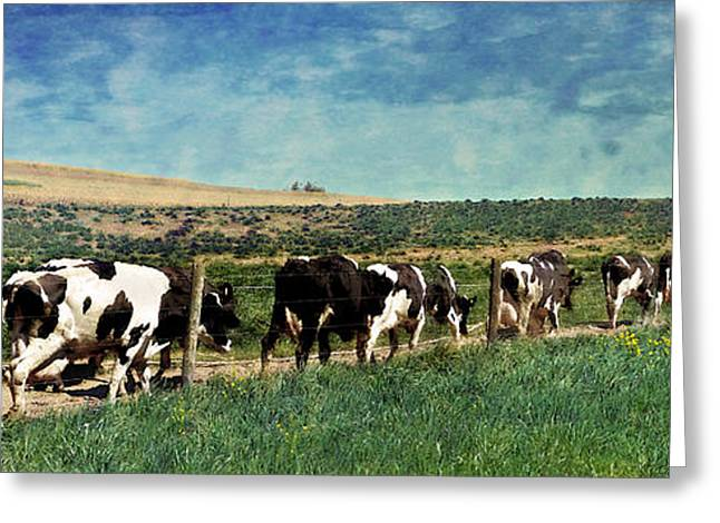 Waiting In Line Greeting Card by Kathy Jennings