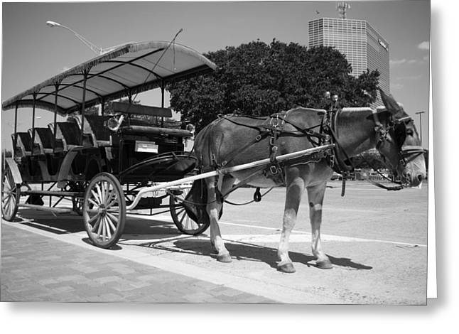 Waiting Mule Greeting Card by Irvin Louque