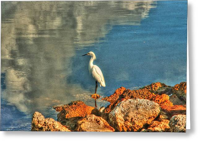 J N Ding Darling National Wildlife Refuge Greeting Cards - Waiting on Dinner Greeting Card by Greg and Chrystal Mimbs