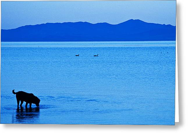 Northwestern Indian Greeting Cards - Waiting the Coming Day Greeting Card by Daniel Hebard