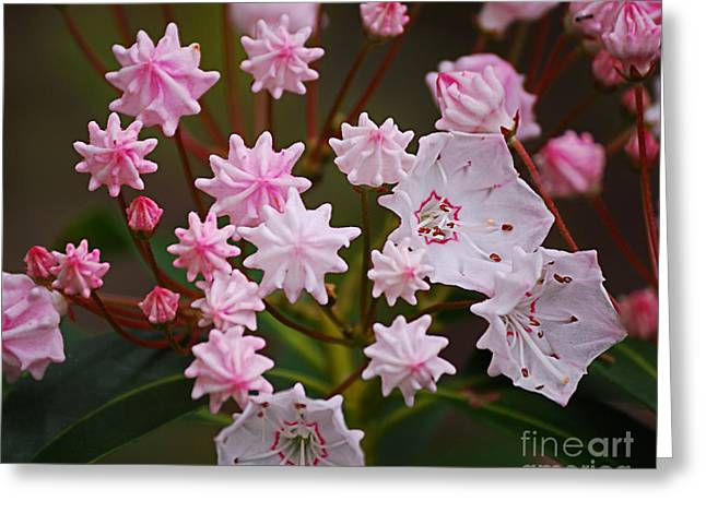 High Virginia Images Greeting Cards - Waiting to Burst Greeting Card by Randy Bodkins