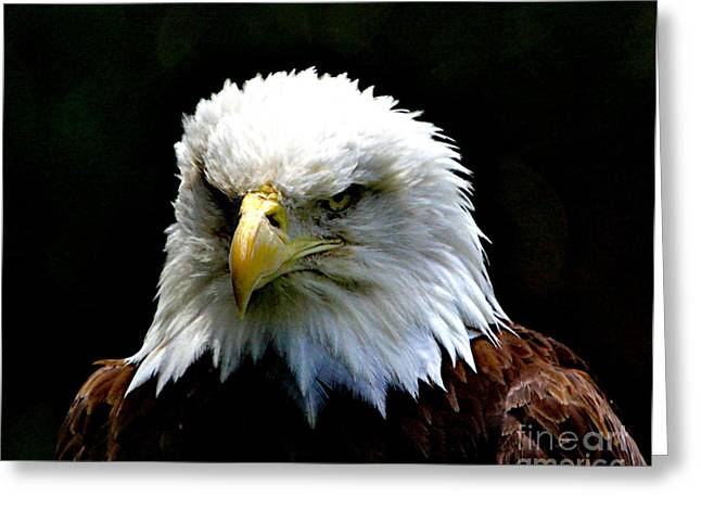 Bird Of Prey Mixed Media Greeting Cards - Wake up America Greeting Card by Robert Pearson