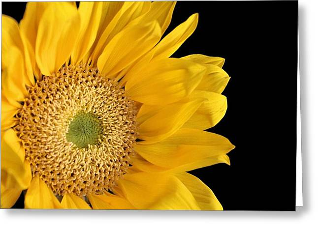 Sunflower Photograph Greeting Cards - Waking Up Greeting Card by Elizabeth Budd