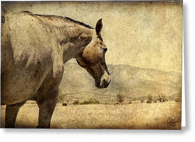 Quarter Horse Greeting Cards - Walking Away Greeting Card by Christine Hauber