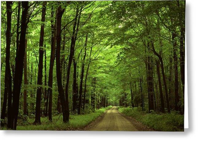 Ilendra Vyas Greeting Cards - Walking Away Forest Path  Greeting Card by ilendra Vyas