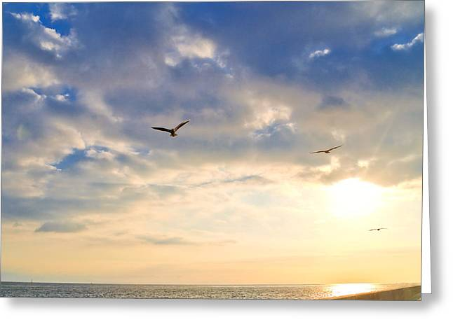Seabirds Greeting Cards - Walkway Along Oceanfront Greeting Card by David Buffington