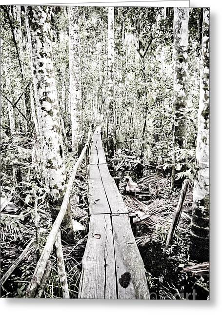 Ecologic Greeting Cards - Walkway into the Amazon Greeting Card by Darcy Michaelchuk