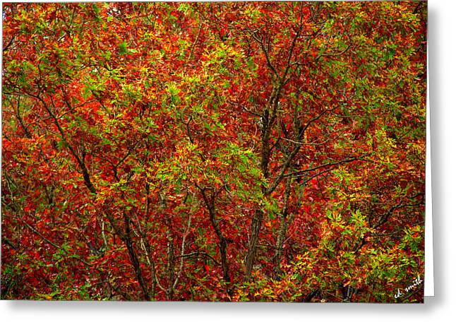 Indiana Autumn Greeting Cards - Wall of Red Greeting Card by Ed Smith