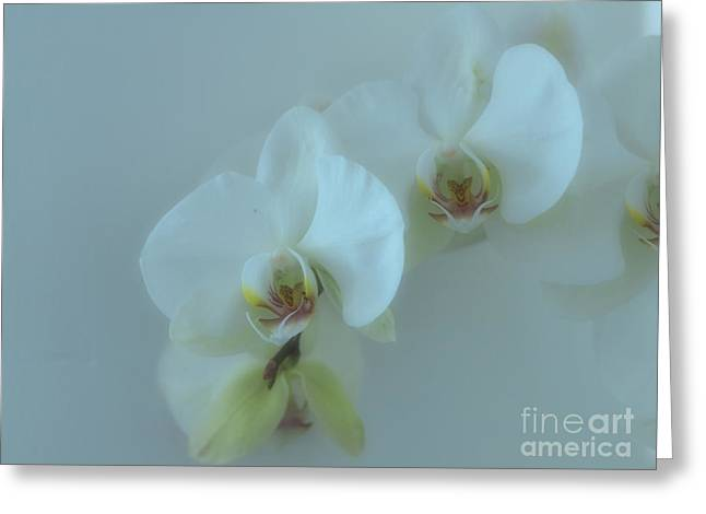 White Orchid Greeting Cards - Wallflower Greeting Card by Joyce Hutchinson
